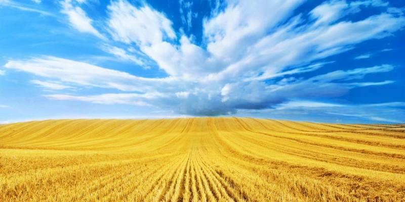 Українська держава та її засади