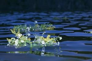 У народі вірили, що в дні великих свят вода в криницях, річках та озерах набуває цілющих властивостей.