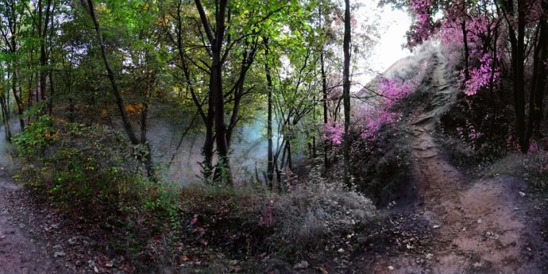Лиса гора в Києві