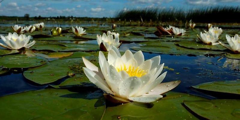 Легенда озера Світязь