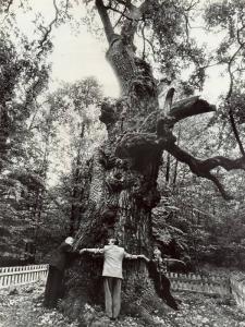 Юзефинський дуб або Дуб-патріарх