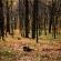 Парасоцький ліс