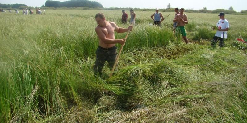 Де в Україні покосити сіна цього літа?