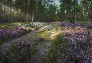 Громадський екологічний лісопарк «Вересковий»