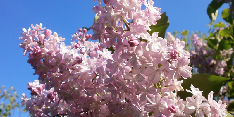 Фотозвіт: Київська весна в Ботанічному саду ім. М. Гришка