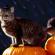 Хелловін. Історія та традиції святкування